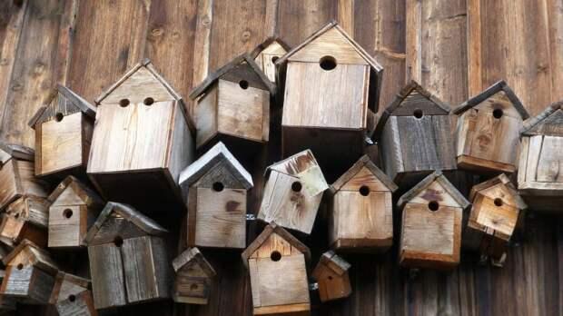 Жители Войковского могут подарить новые квартиры птицам в парке «Покровское-Стрешнево»