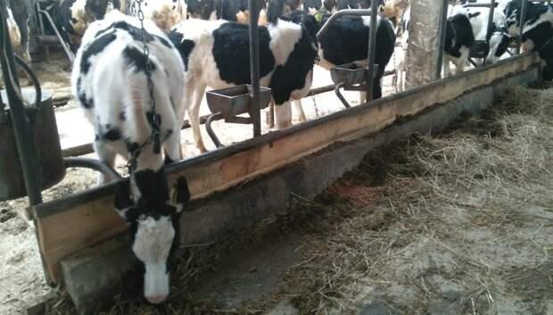 Мелких фермеров Подмосковья поддержат кредитами и субсидиями