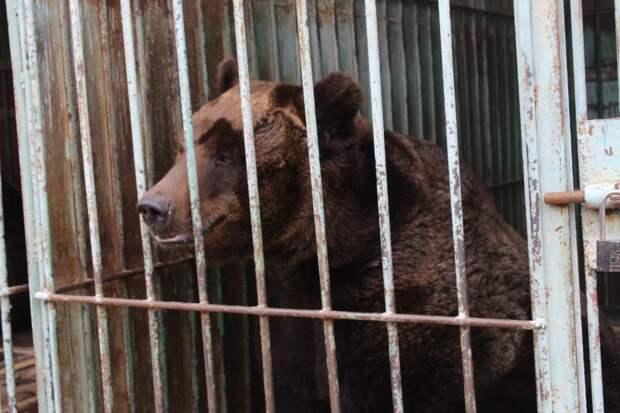 Оставьте медведей в Уссурийске: зоозащитники просят администрацию сохранить зверинец