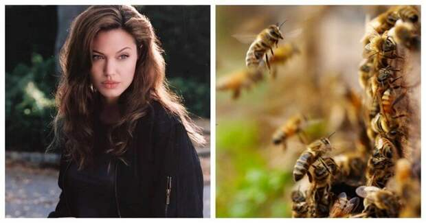 Анджелина Джоли снялась внеожиданной фотосессии сроем пчёл