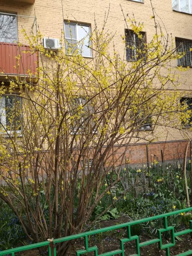 Сад за апрель.