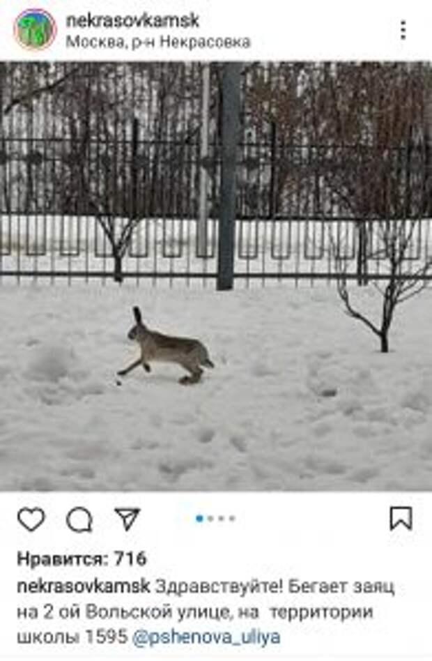 Зайчик в Некрасовке / Скриншот из социальной сети Instagram. Автор фото: pshenova_uliya