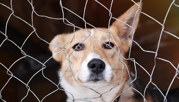 Активисты Подольска помогли построить забор чеховскому приюту для животных