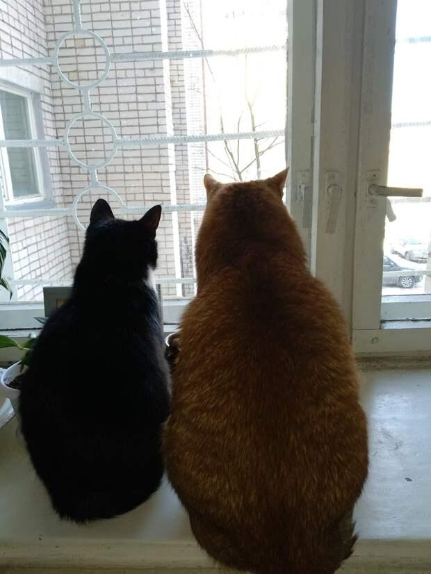 Пять лет назад во дворе появились котята...