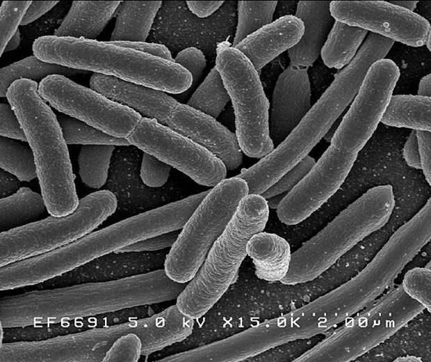 Ученые нашли организм, живший на Земле до Завоевания?