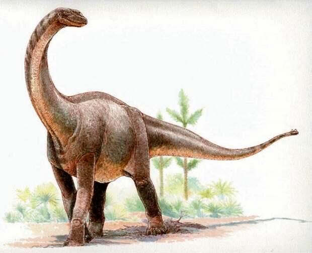 Рис. 3. Квезитозавр (Quaesitosaurus orientalis), длина тела – около 20 м