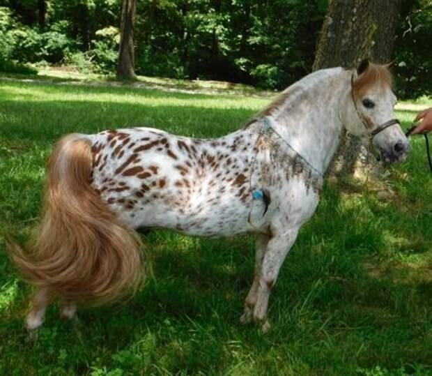 Красивые и шикарные лошадки из нашей жизни