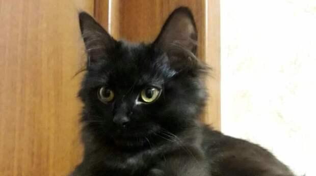Люди купили «породистую» кошку, которая оказалась серьёзно больна