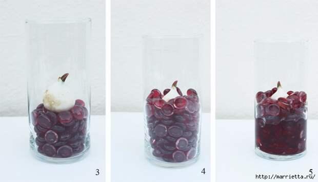 Выращивание тюльпанов в прозрачной вазе (2) (640x368, 97Kb)
