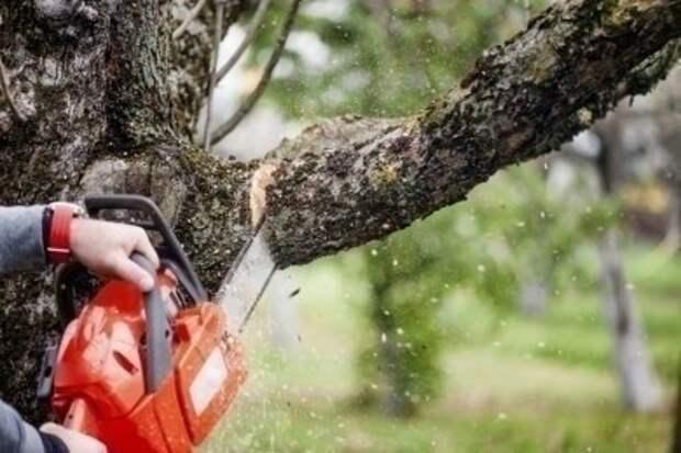Общественные обсуждения по вопросам планируемого удаления объектов растительного мира.