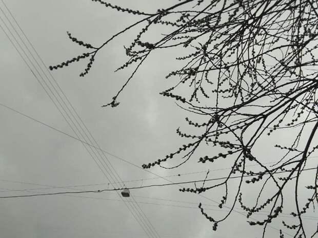 Жителей Подмосковья предупредили о дожде и шквальном ветре во вторник