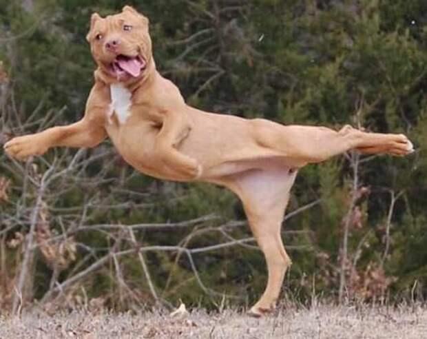 """15. Тише! Идет репетиция балета """"Лебединое озеро"""" домашние животные, домашние животные.собака, забавные собаки, пес, смешные фото, собаки, фото собак, юмор"""