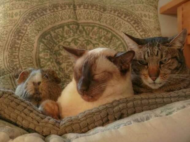 20+ котов, которым нужно срочно устранить сбой в системе и перезагрузиться