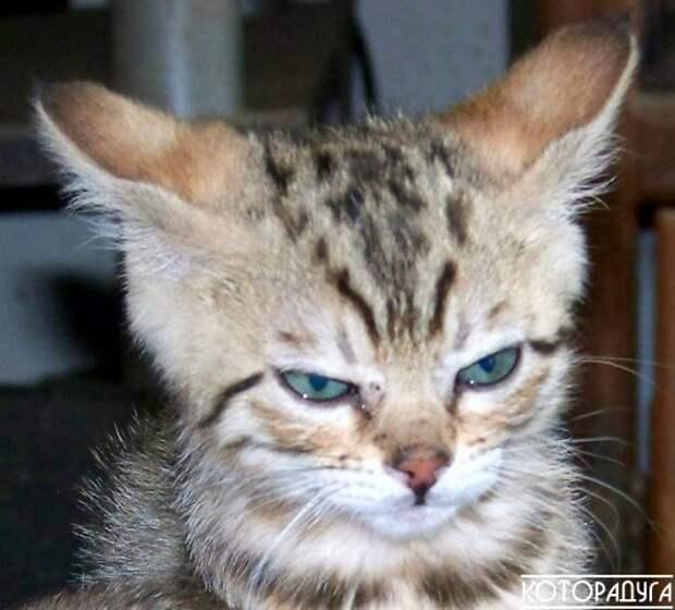 """""""Человек, я зол: проснулся в три ночи тебя будить, а ты не спишь!"""" Смешные котики"""