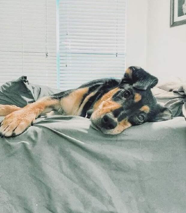 Пес на кровати
