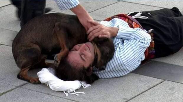 Чтобы «спасти» актера, бродячая собака вмешалась в спектакль