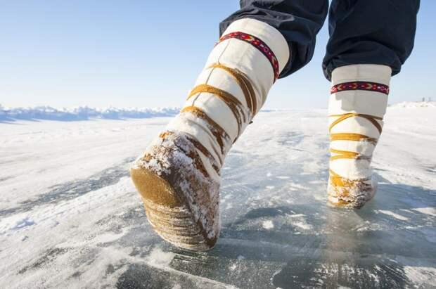 НаЯмале предложили ввести господдержку для молодых блогеров изчисла аборигенов Арктики