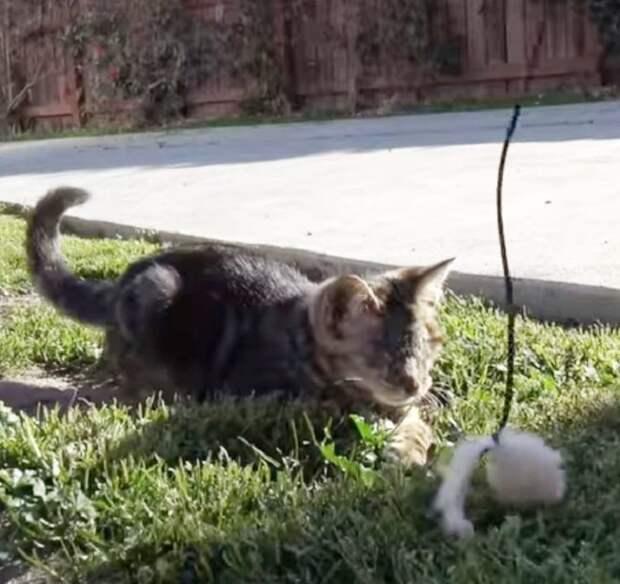 Котенок и игрушка