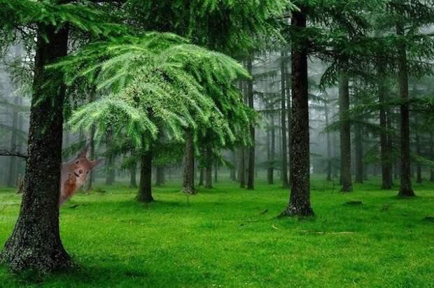 Польза хвойного леса