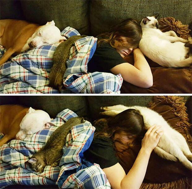 18. Сладкие сны животные, жизнь, кот, питомец, семья, собака, фото