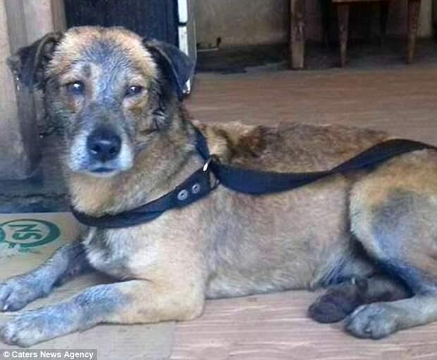 В Аргентине полицейские спасли обмазанную смолой собаку