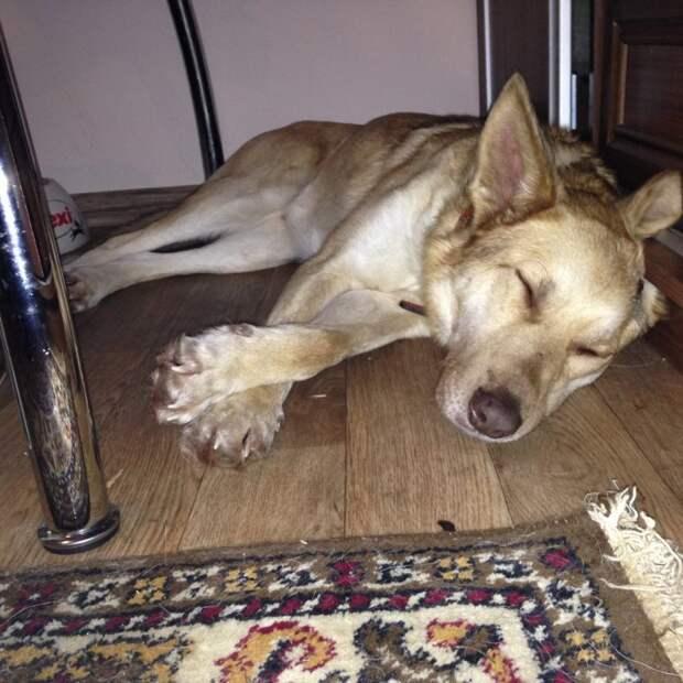 Волонтер 2 года искала этому псу хозяев, но затем решила прекратить попытки волонтер, истории спасения, пес, приют, собака, собаки