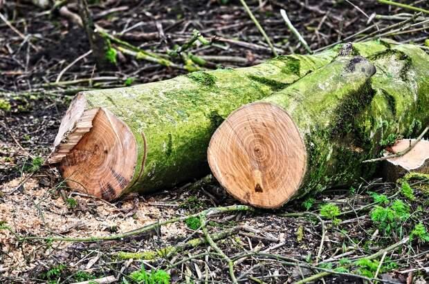 Севастопольцам позволят в Интернете следить за уничтожением деревьев