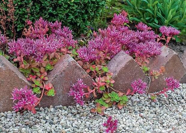 Клинкерные кирпичи, установленные в земле на ребро и скрепленные друг с другом цементно-песчаным раствором, отделяют цветник от дорожки как зубчатый бордюр.