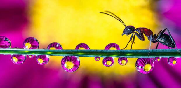 Магические макроснимки капель воды поражают воображение