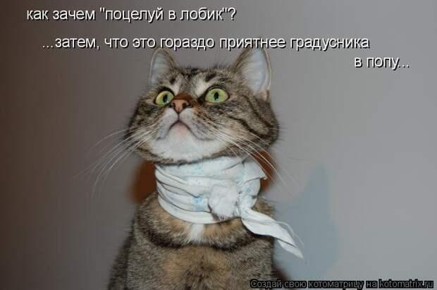 1474017320_kotomatricy-2