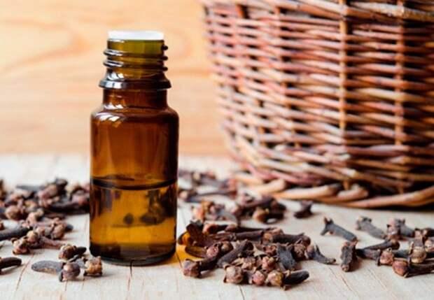 Эфирные масла, которые борются с вирусами и бактериями в доме
