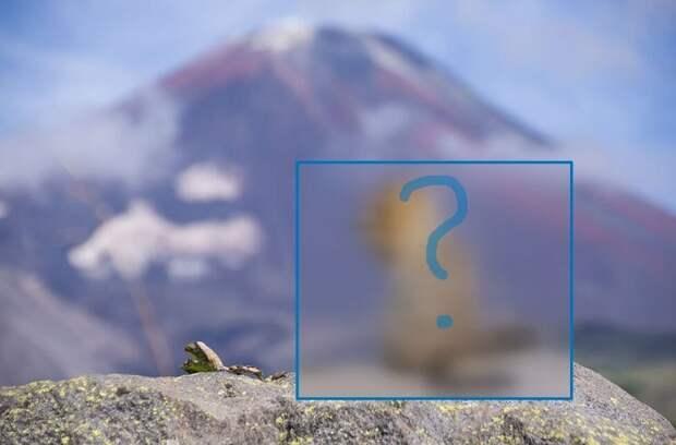 Что за зверь – Камчатский евражка?
