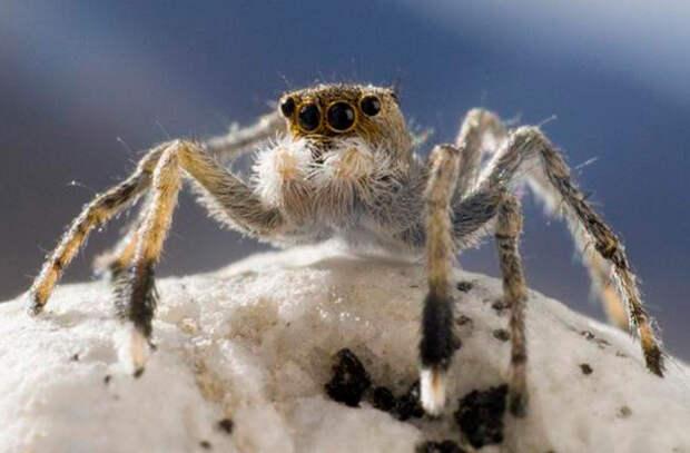 пауки в горах
