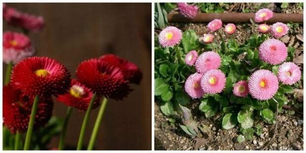 Неприхотливые цветы, которые можно выращивать где угодно