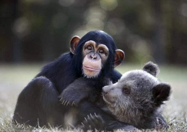 обезьяна и медведь