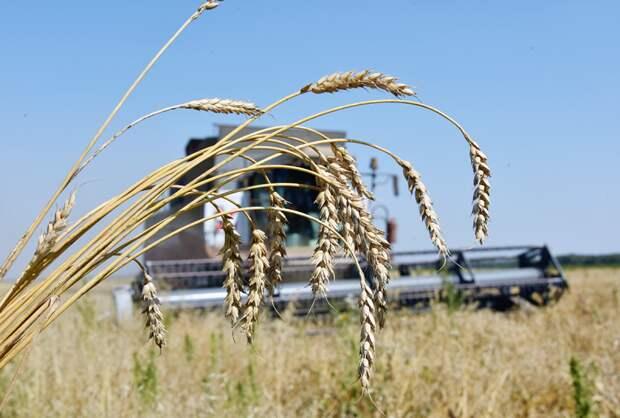 Кубань аграрная: что отправим на экспорт