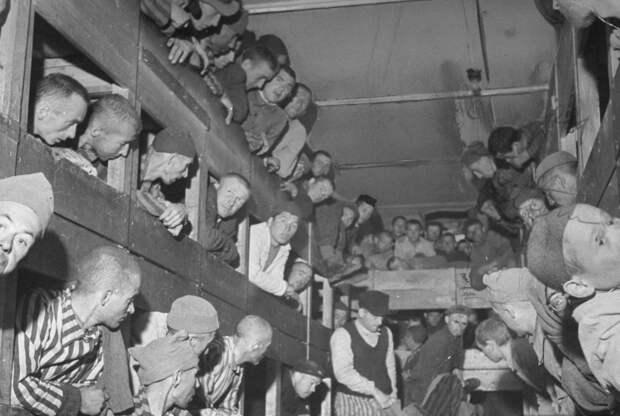 «Подумайте, как мы умирали»: история ужасов в концлагере Дахау