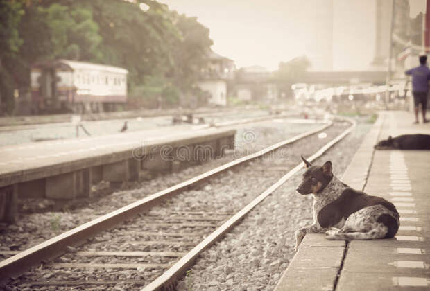 Собаку не пустили в поезд....