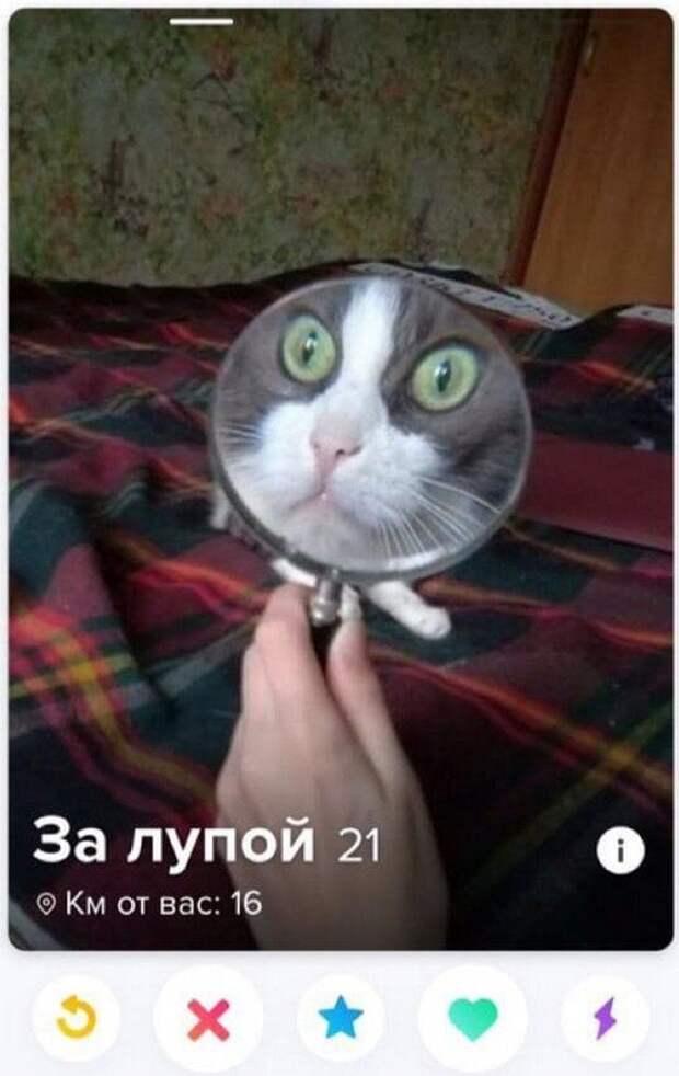 Кот смеется над знакомтва