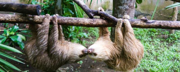 Дикий секс: как это делают дикобразы, ленивцы, осьминоги и другие