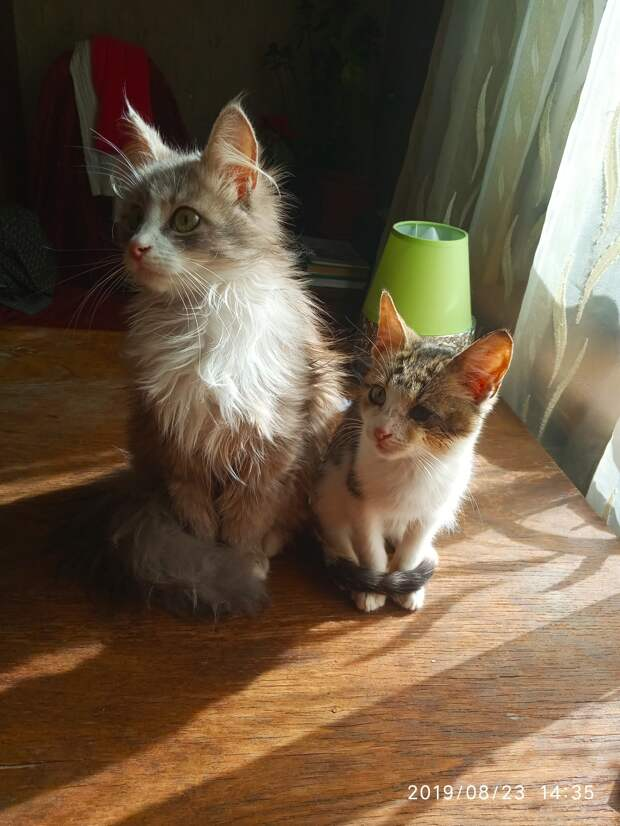 кошка и котёнок