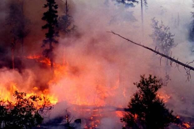 Дым горящей сибирской тайги застилает Отечество
