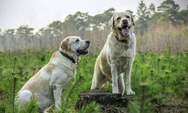 Собаки на ферме