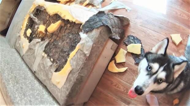 Накосячили или топ провинившихся собак