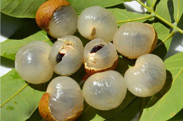 Лонган еда, фрукты, экзотика