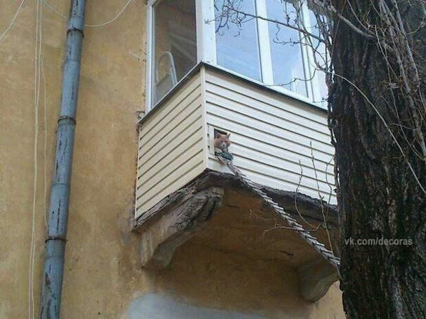 Парадный выход для кота