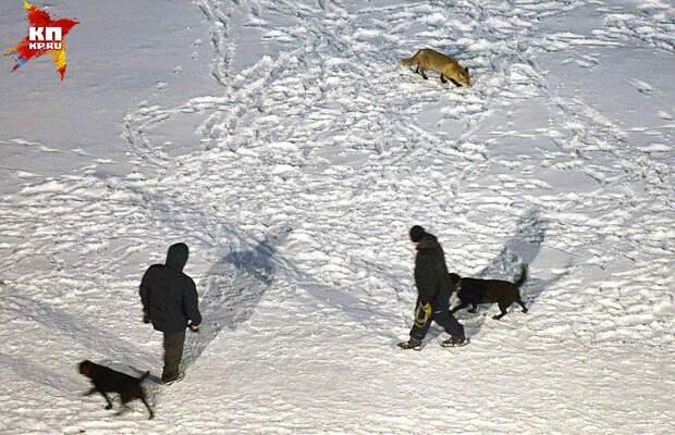 А местные собаки на Алису реагировать перестали Фото: Михаил ФРОЛОВ