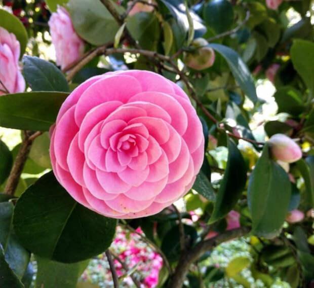 Идеальный цветок. | Фото: AdMe.