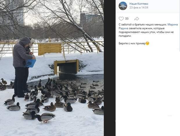 Утки на Большом Садовом пруду переходят на «самообеспечение»