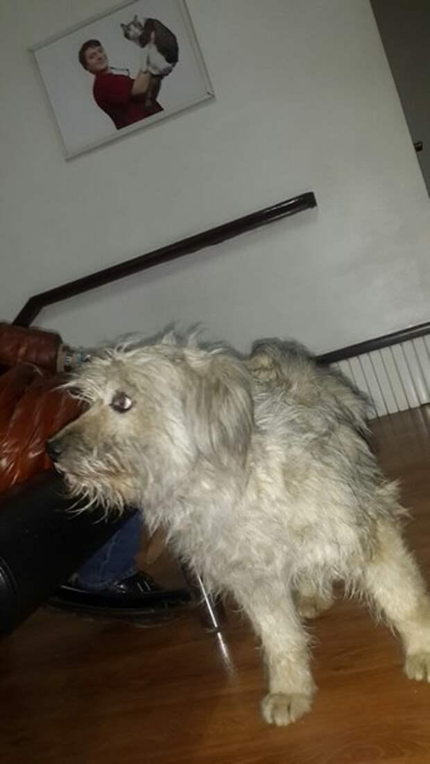 Бездомную собаку и её щенков подкармливали, но однажды они пропали! Причина оказалась печальной…